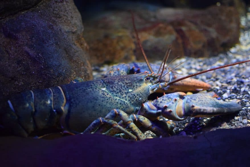 Loveland Living Planet Aquarium Utah