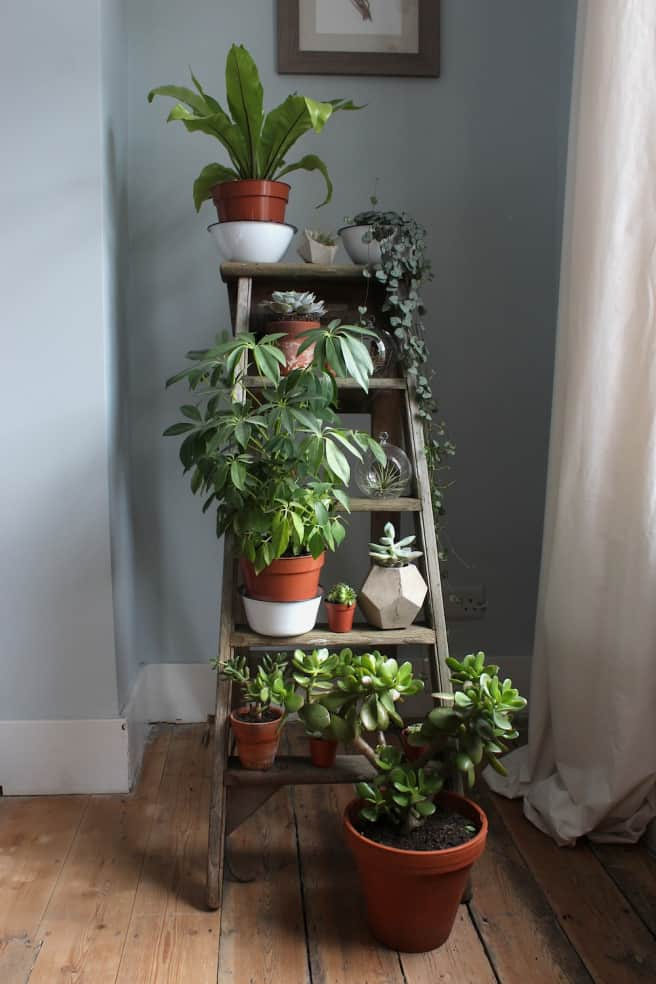 house plants, plant stand ladder