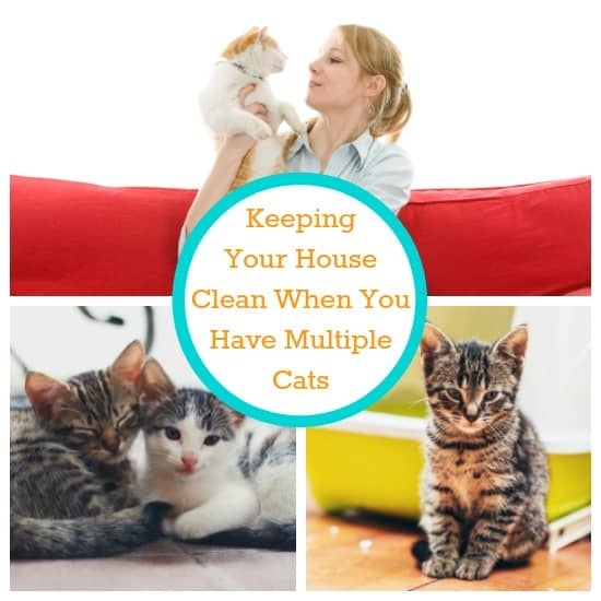 Kepping your house clean with multiple cats