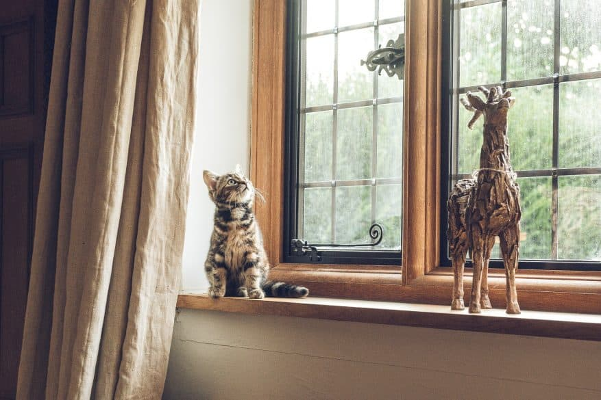 cat in windowsill