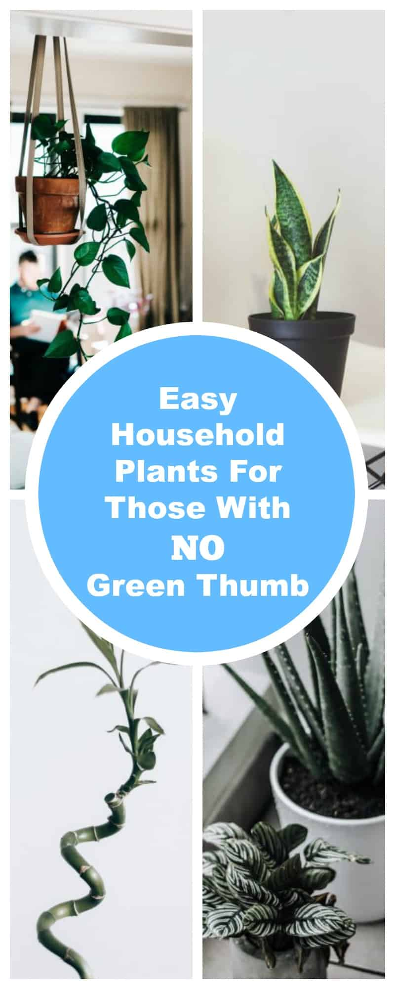 Easy Household Plants for Those With NO Green Thumb
