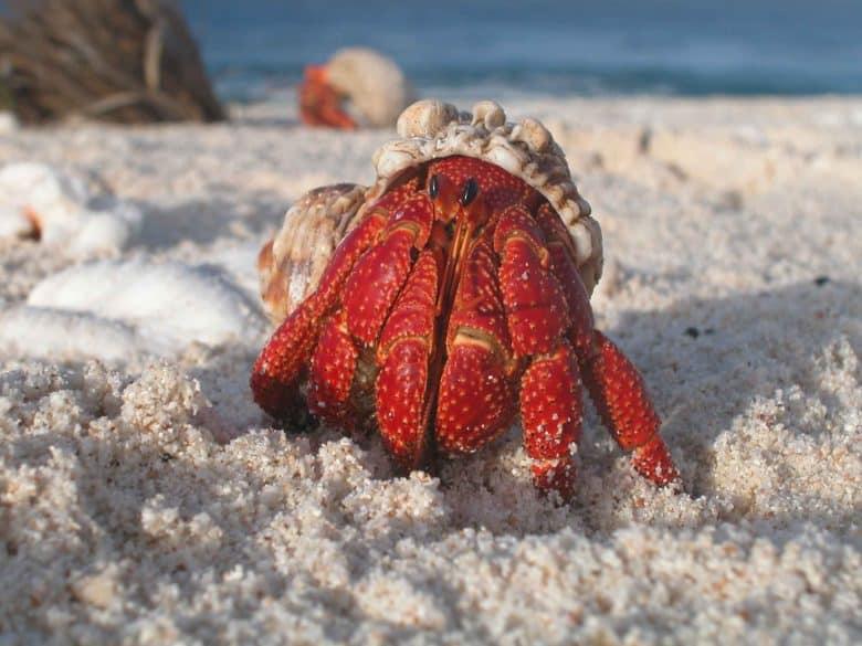 hermit crabs-pets for children