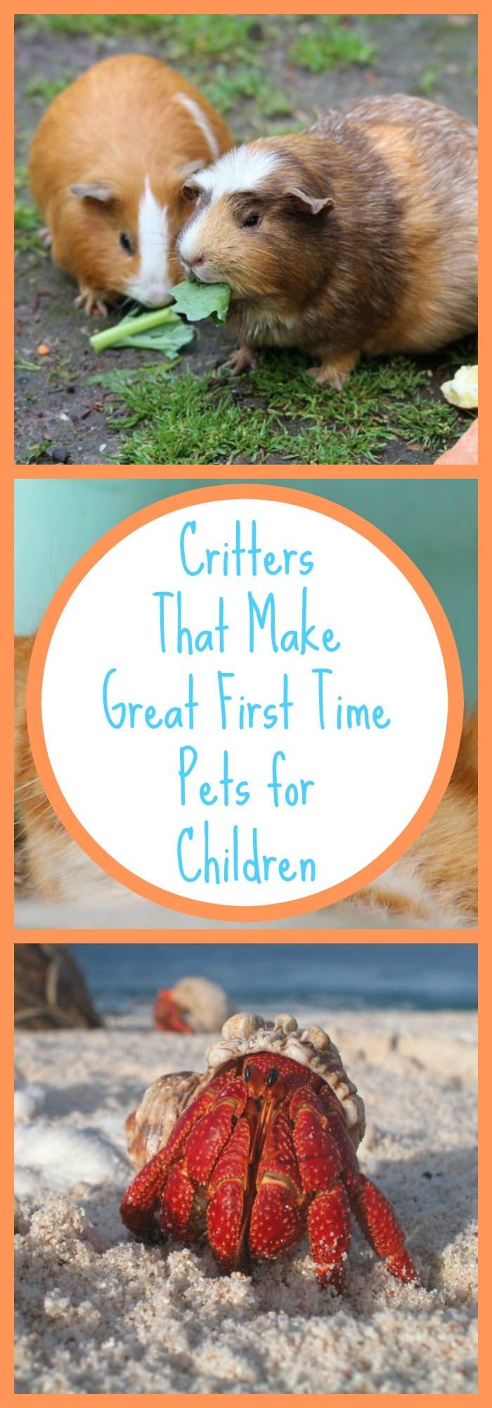Great First Time Pets for Children