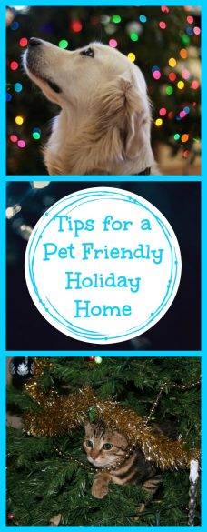 Tips for a Pet Friendly Holiday Home