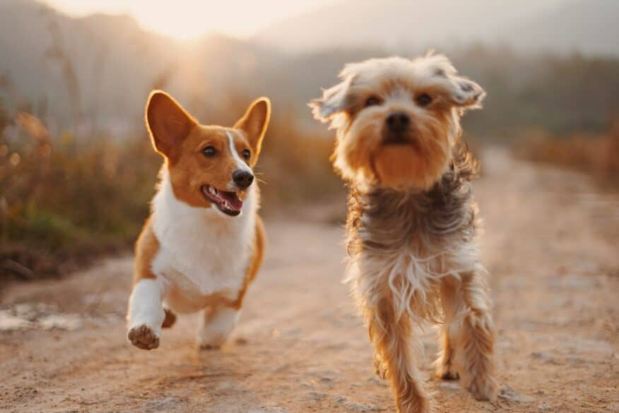Two dogs running next to each other outside.
