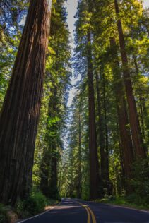 redwood trees enjoy nature with your kids